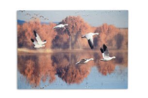 IMAGOS, https://konsimo.pl/kolekcja/imagos/ Obraz czaple pomarańczowy/błękitny/biały - zdjęcie