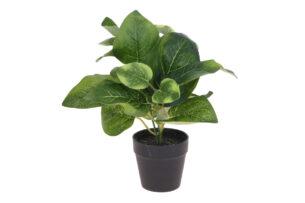BLUMISI, https://konsimo.pl/kolekcja/blumisi/ Kwiat w doniczce zielony/czarny - zdjęcie